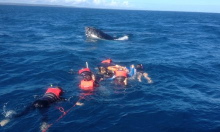 Swim with humpback whales off Australia's Fraser Island