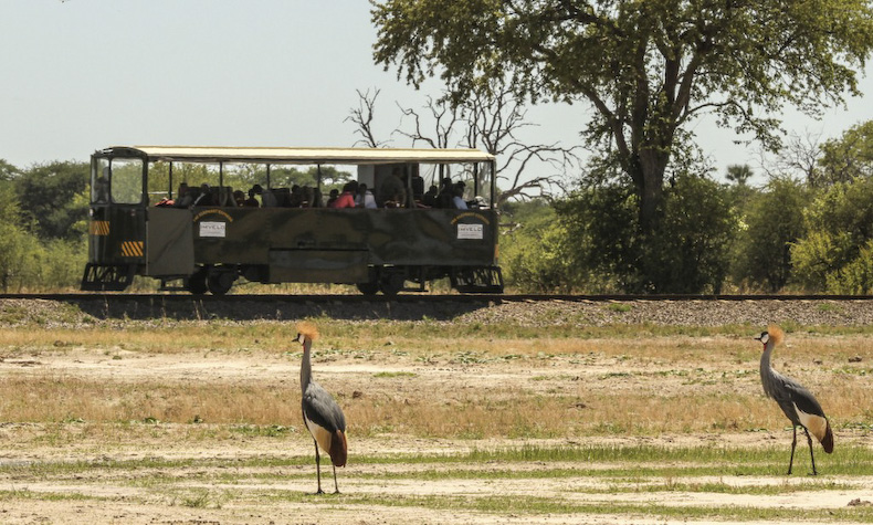 The Elephant Express, Hwange 1