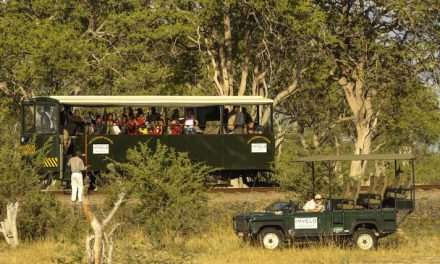 The Elephant Express, a unique safari activity in Zimbabwe