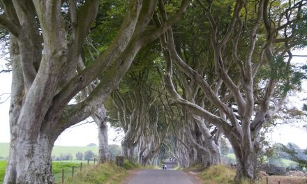 Dark Hedges, Ballymoney