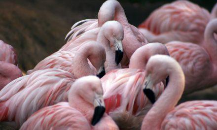 Enjoy flamingos with MarBella Corfu