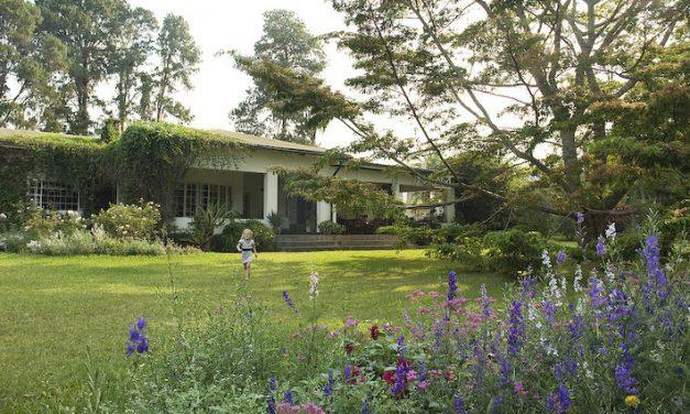 TEA-Total experiences at Malawi's Satemwa Estate