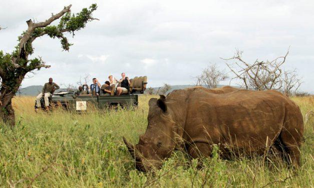 Track rhino with Thanda Safari experts