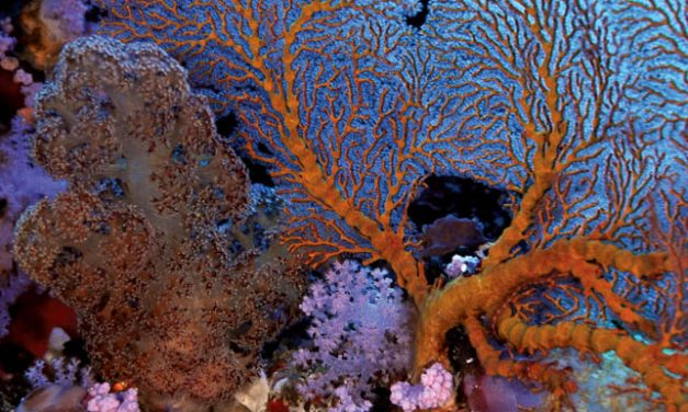 Zanzibar's Rising Sun Dive Centre enhances underwater experience through e-learning